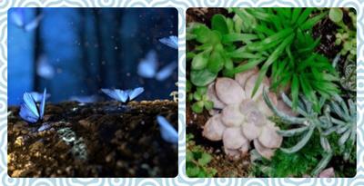 Crafternoon - DIY Mini Fairy Garden